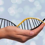 Budai Bábapont Genetikai vizsgálatok